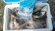 北海道の釣り!!ホッケ釣りを語る