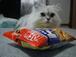チンチラ(猫)Love!