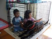 CHILD&DOG in 関西