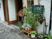 BALANCE 新宿十二社