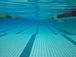 敷島公園水泳場で泳ぐ会