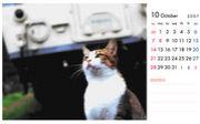 猫の駅員さん