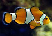 薬物採集の海水魚は飼いません!
