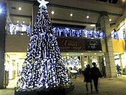 ☆クリスマス気分向上委員会☆