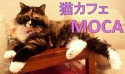 猫カフェ MOCA