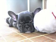 ワンコの寝顔^O^