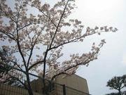 桜が丘*秋葉台*木津*押部谷