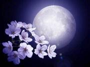 ・.。*†*。.紫月.。*†*。.・
