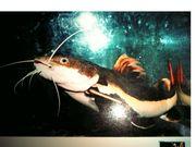 日本海洋科学専門学校