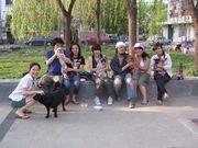 北京犬の会