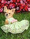 (▼*´エ`*)犬服♥