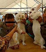 ウサギ ジャンボ
