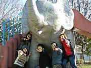 MAKOTO ELEPHANTS