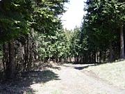 群馬の林道