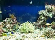 OKINAWA 海水魚採取  飼育