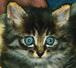 ネコのいろいろ。(猫の写真集)