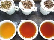 ダージリン紅茶 茶園で語ろう
