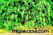 miyakoda.com