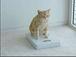 AQUOSの猫さん