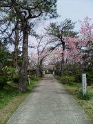 胡麻郷小学校