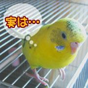 私、鳥なんです