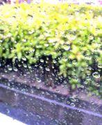 雨が好き。