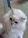 鹿児島の猫好き集合