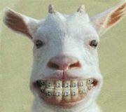 歯医者さんでの笑える珍事件