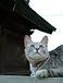 ぬこ☆猫萌えかんぱにぃ〜☆らぶ