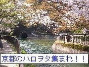 京都のハロヲタ集まれ!!