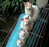 猫好き、集まれ!