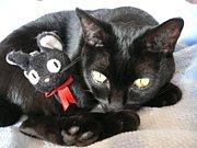 ++我が家の黒猫はジジ++