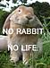 NO RABBIT, NO LIFE.