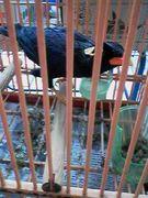 九官鳥の会