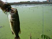 大江川を釣り尽くす(新)