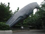 鯨(くじら)が怖い