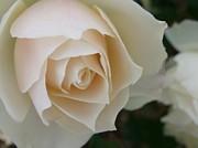 「花」の物語