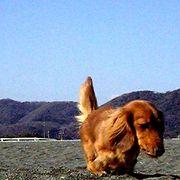 【犬】犬の里親探し・飼い主探し