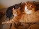猫の写真をバンバン貼ろう!!