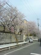 京都市立久世西小学校が・・・