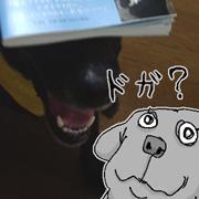 ヨシダプロの愛犬「モモ」が好き