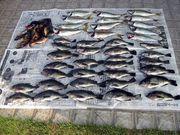 ローカルな釣り情報