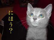 猫のにほいフェチ