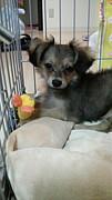 関東☆MIX犬・小型犬の輪☆