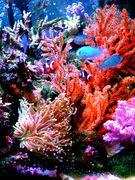 珊瑚海洋研究会