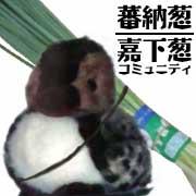 蕃納葱 / 嘉下葱