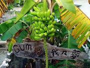 Gum〜我々夢〜