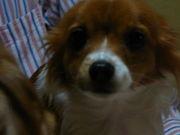 2007年4月出産予定のママさん☆