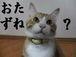 松本人志(猫)捜索願い