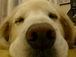 うちの犬はマジでかわいい!!!